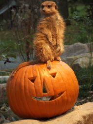Halloween im Tierpark Sababurg. Foto: Tierpark Sababurg