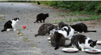 Fütterung von Streunern auf einem Anwesen. Foto: nh