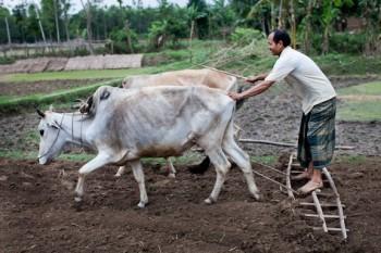 Bangladesch. Immer noch leben Dreiviertel der Bevölkerung in Bangladesch auf dem Land und ein Großteil von ihnen arbeitet als Kleinbauer in der Landwirtschaft. Foto: Kathrin Harms/MISEREOR