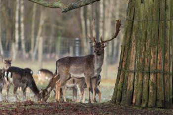 Der Wald erwacht im Tierpark Sababurg. Foto: nh