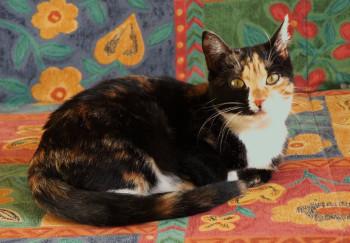 Tier der Woche 52/2014: Edwina. Foto: Guxhagener Katzenhilfe