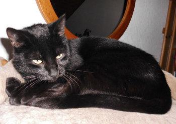 Das Tier der Woche 50/2014: Heidi. Foto: Guxhagener Katzenhilfe