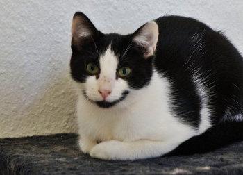 Tier der Woche 51/2014: Holly. Foto: Guxhagener Katzenhilfe
