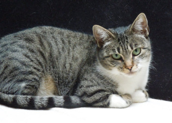 Tier der Woche 03/2015: Mia. Foto: Guxhagener Katzenhilfe