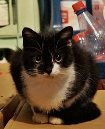 Tier der Woche 01/2015: Ilvy. Foto: Guxhagener Katzenhilfe