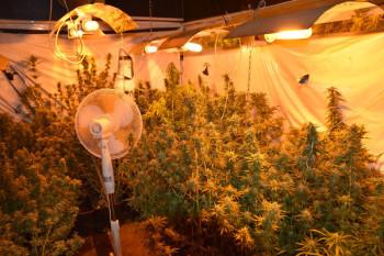 Teile der sichergestellten Pflanzen und Anlage. Foto: Polizeipräsidium Nordhessen/obs