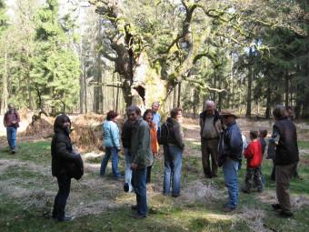 Gemeinsam mit dem BUND Schwalm-Eder-Süd kann man den Tierpark Sababurg erkunden. Foto: nh