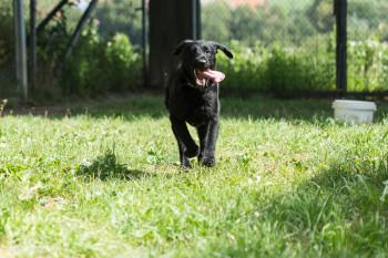 Tier der Woche 24/2015: Hanne. Foto: Tierheim Beuern
