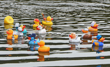 Bei geringer Strömung und leichtem Gegenwind hatten es die die Enten nicht eilig. Foto: Reinhold Hocke