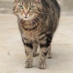 Tier der Woche 29/2015: Nicki. Foto: Tierheim Beuern