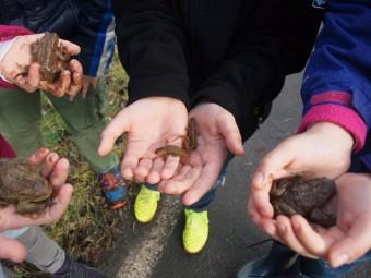 Osterfreizeit Licherode: Kinder retten Kröten. Foto: nh