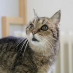 Tier der Woche 07/2016: Sonja. Foto: Tierheim Beuern