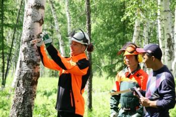 HessenForst engagiert sich international für gezielte Aufforstung, naturnahe Waldpflege und kontrollierte Holznutzung: In Kasachstan wird gezeigt, wie man den Wald entsprechend pflegt. Foto: HessenForst