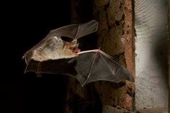 Das geheimnisvolle Leben der Fledermäuse erkunden. Foto: nh