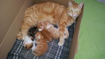 Die Katzenmama mit ihrem Nachwuchs. Foto: nh