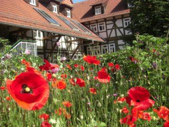 Das Schullandheim Licherode hinter Blüten. Foto: nh