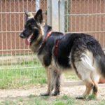 Tiere der Woche 25/2016: Lucy. Foto: Tierheim Beuern