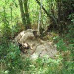 Fotos der getöteten Schafe. Foto: Polizeipräsidium Nordhessen/obs