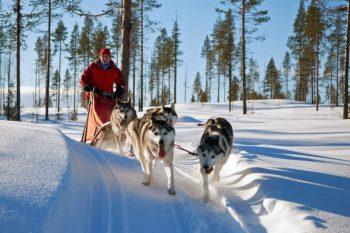 Huskytour durch das verschneite Lappland. Foto: nh