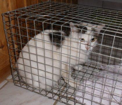 Foto: Guxhagener Katzenhilfe