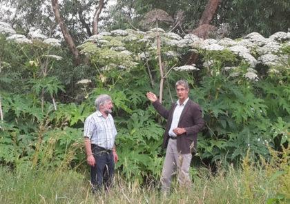 Lothar Kothe und Dietmar Groß zeigen die Ausmaße, die Bärenklau annehmen kann. Foto: nh