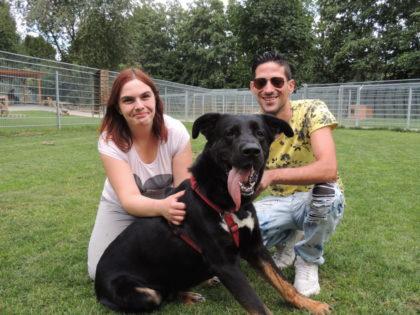 Schäferhund-Mischling Diego kann wieder nach Hause. Foto: Tierheim Beuern