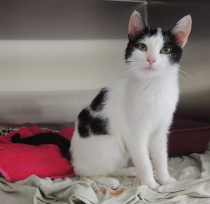 Katze Eliza verbrachte die Nacht bei Gewitter und mit einer Schlinge um den Hals im Freien. Foto: Tierheim Beuern