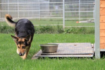 Tier der Woche 39/2017: Lucy. Foto: Tierheim Beuern