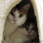 Katze Shirin und Kater Schnübi. Foto: Tierheim Beuern