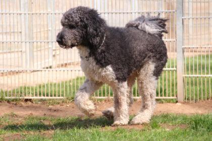 Der am Sportplatz in Ungedanken angeleint vorgefundene Hund. Foto: Tierheim Beuern