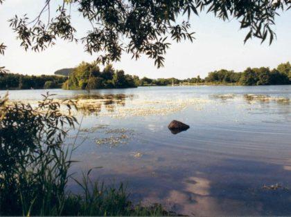 Der Schwarzenbörner Teich. Foto: nh