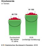 Die Kirscheimer werden dieses Jahr wieder voller werden. Grafik: Destatis | nh