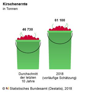 Die Kirscheimer werden dieses Jahr wieder voller werden. Grafik: Destatis   nh