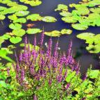 Eine ausgezeichnete Lage, viel Entwicklungspotenzial und auch eine einzigartige Flora – für eine Landesgartenschau hätte Schwalmstadt alles zu bieten gehabt. Foto: Schmidtkunz