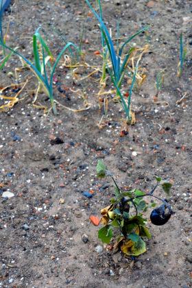 Die Trockenheit 2018 verursacht hohe landwirtschaftliche Einbußen. Foto: Schmidtkunz