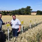 Auf dem Versuchsfeld in Homberg-Mardorf informierte sich Wiebke Knell (FDP) bei den Pflanzenbauberatern Frank Hahn und Dr. Marco Schneider vom Landesbetrieb Landwirtschaft Hessen (LLH). Foto: nh