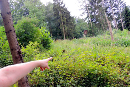 Dort, unweit des Hochsitzes, wurden die possierlichen Langohren von einer Spaziergängerin entdeckt. Foto: nh