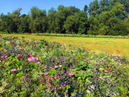 Bienenwiese – Saatgut aus Eschwege. Foto: nh