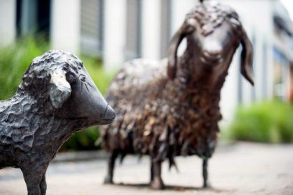 Schafsgruppe. Foto: Blafield | nh
