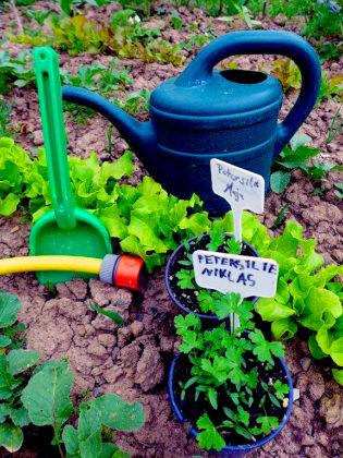 Ein passender Notfallplan hilft dabei die Pflanzen auch mit geringem Wasserangebot gut durch den Sommer zu bringen. Foto: LLH