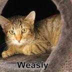 Tier der Woche 34/2018: Weasly. Foto: nh