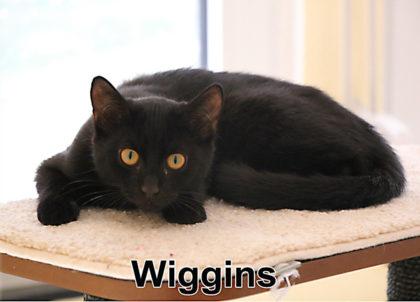 Tier der Woche 34/2018: Wiggins. Foto: nh