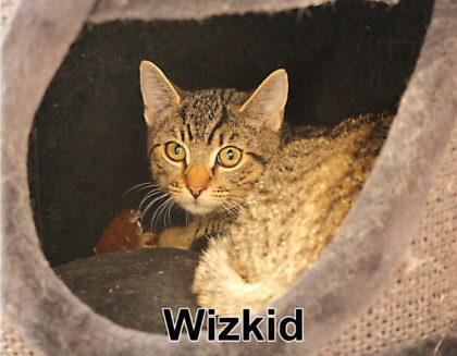 Tier der Woche 34/2018: Wizkid. Foto: nh