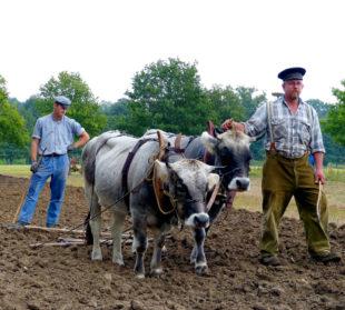 Das Herbstfest im Tierpark Sababurg wartet mit etlichen landwirtschaftlichen Vorführungen auf. Foto: Tierpark Sababurg