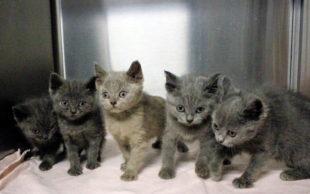 Ausgesetzte Katzenwelpen suchen ein neues Zuhause. Foto: nh