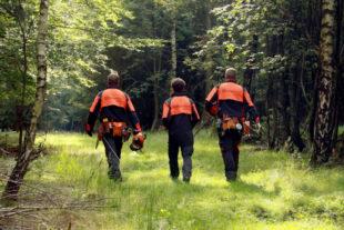 Für den Klimaschutz im Einsatz: Durch bewusste Waldpflege fördert HessenForst klimarobuste Mischwälder. In 2017 gehörte hierzu neben der Waldpflege auch die Pflanzung von rund 1,3 Mio. jungen Bäumen allein im hessischen Staatswald. Foto: M. Mahrenholz