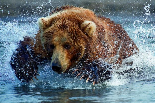 Szene aus dem Vortrag »Episoden aus dem Tierleben«. Foto: Romanow