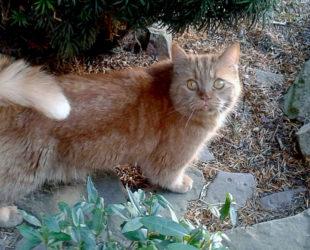 Karlchen ist wie ein Bumerang. Immer, wenn er vermittelt wurde, kommt er zur Katzenhilfe zurück. Foto: Büchling