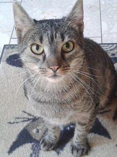 Für Tiere wie den dreibeinigen Luke setzt sich die Guxhagener Katzenhilfe mit Herzblut ein. Foto: nh