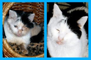 Beispiel für eine Tierrettung: Männlein vorher (li.) und nachher (re.). Fotos: Büchner